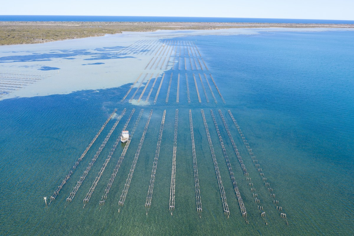 Cowell Seafood Producers lease