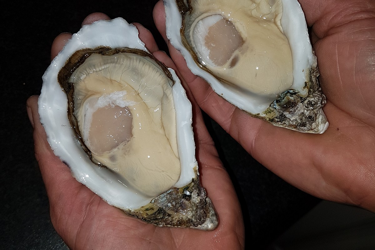 Shuck me oysters 20170729_180259