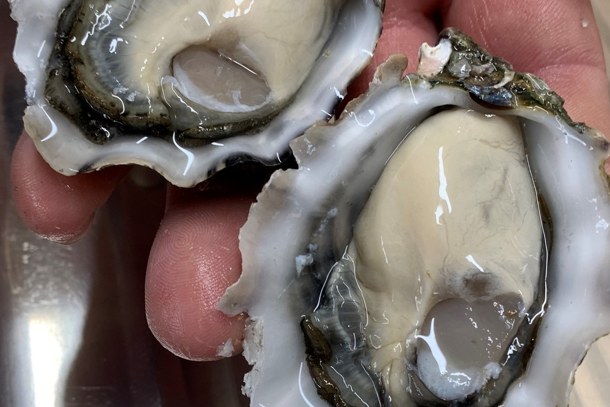 Smoky Bay Oysters - Oysters6