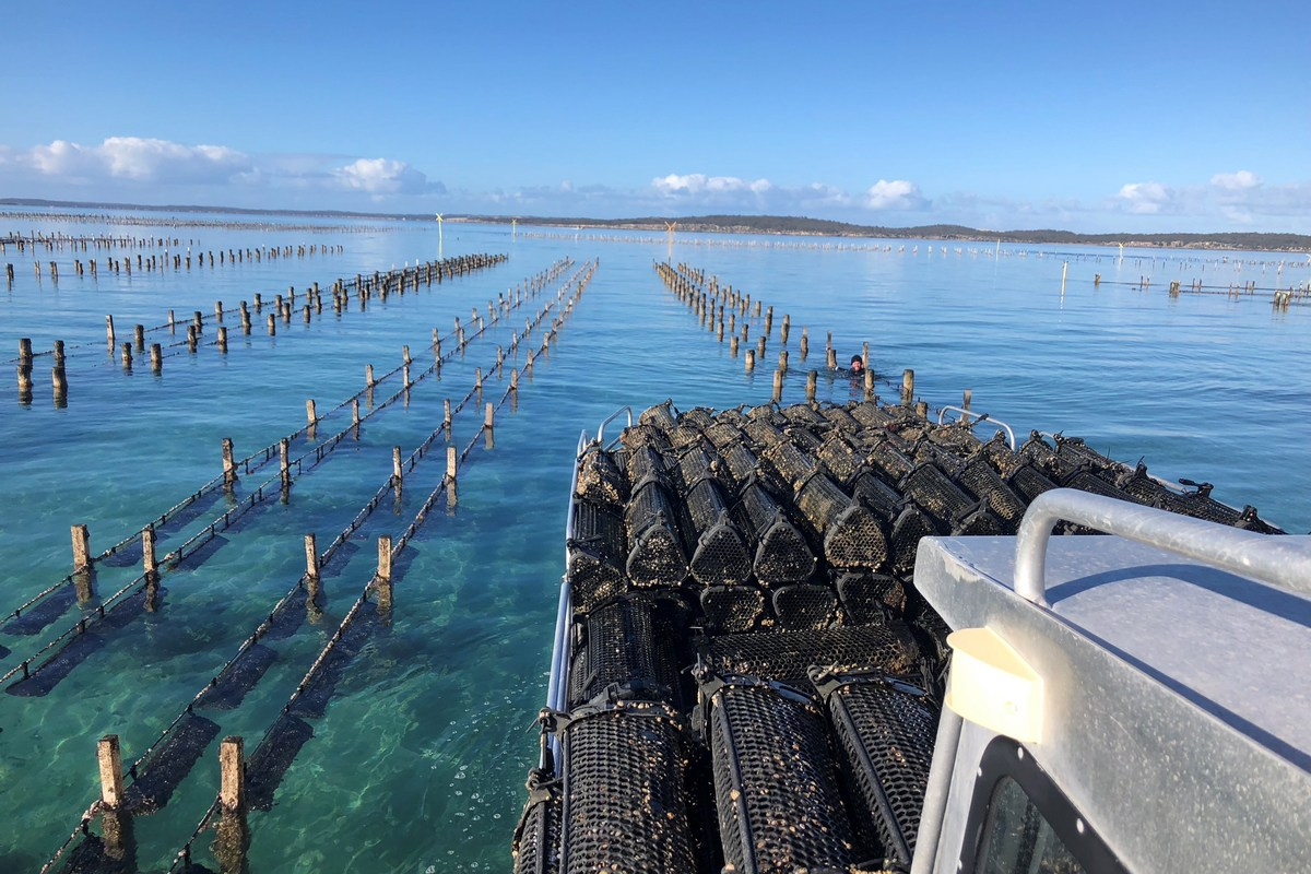 West Coast Oysters Coffin Bay 1