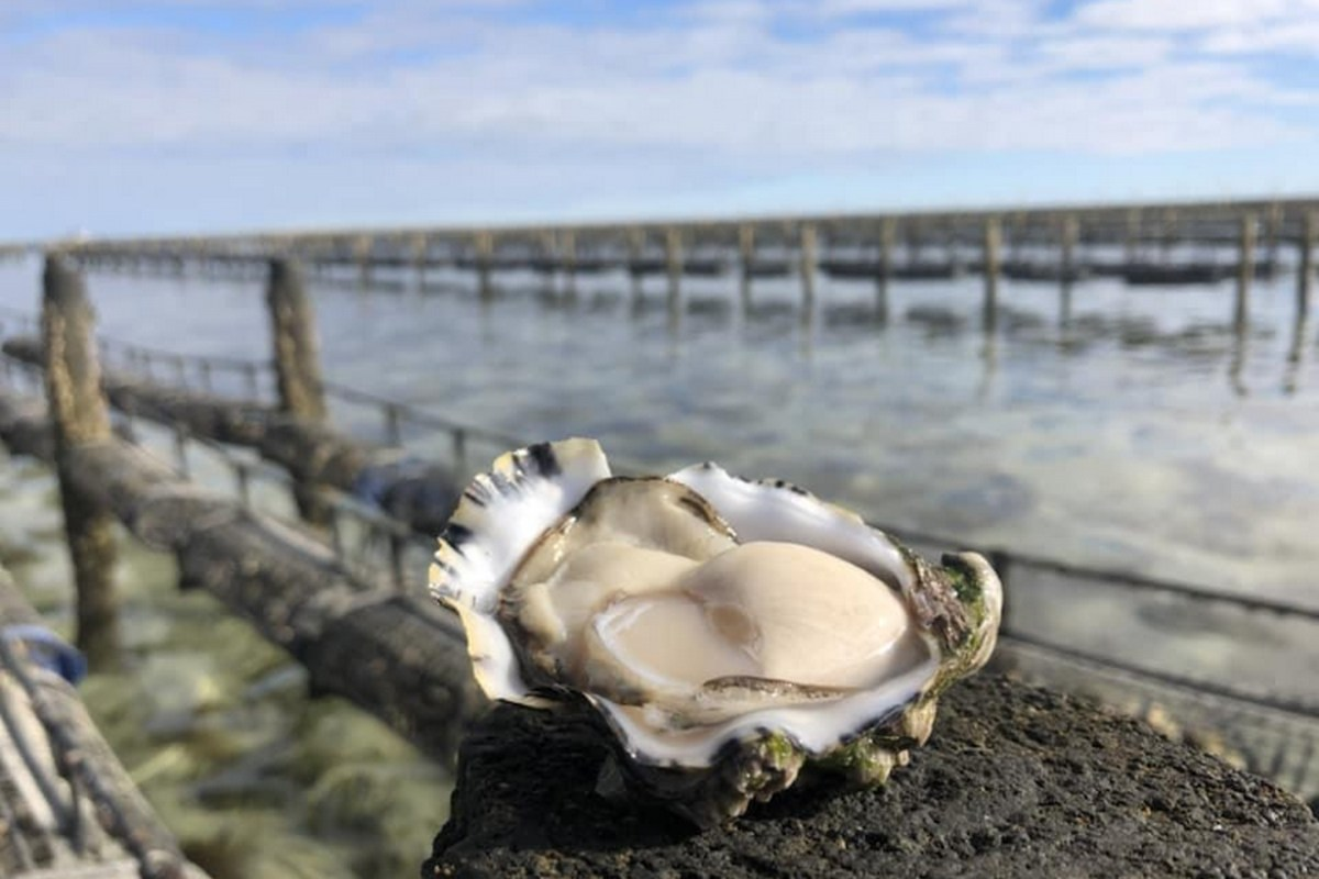Wild West Oysters1