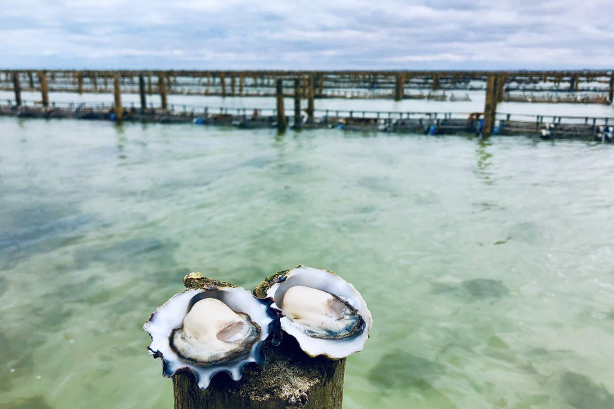 Wild West Oysters2